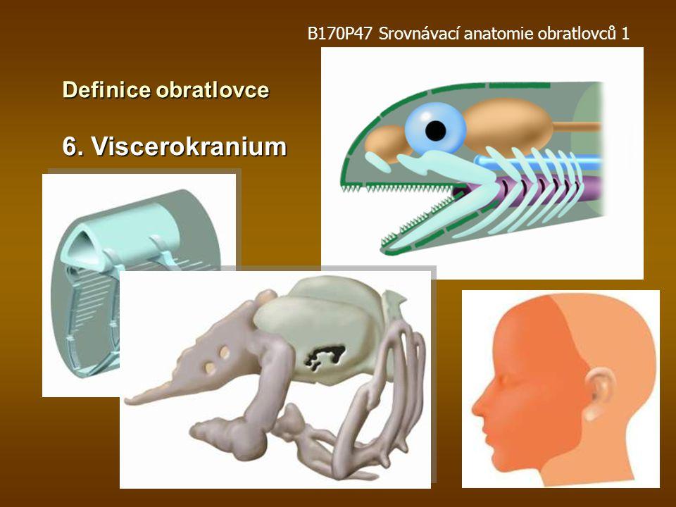 6. Viscerokranium Definice obratlovce