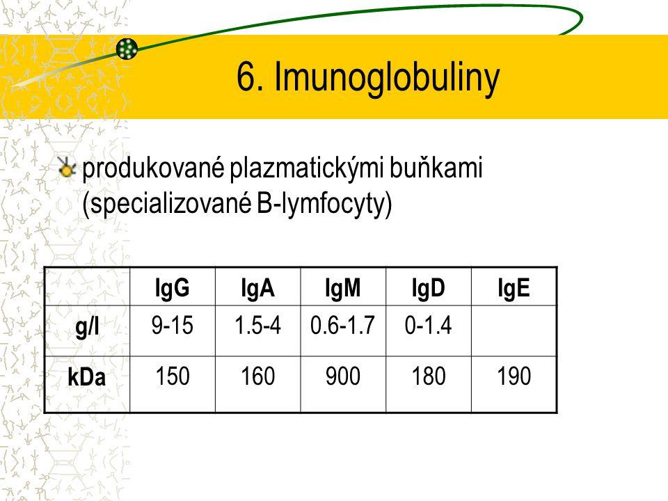 6. Imunoglobuliny produkované plazmatickými buňkami (specializované B-lymfocyty) IgG. IgA. IgM. IgD.