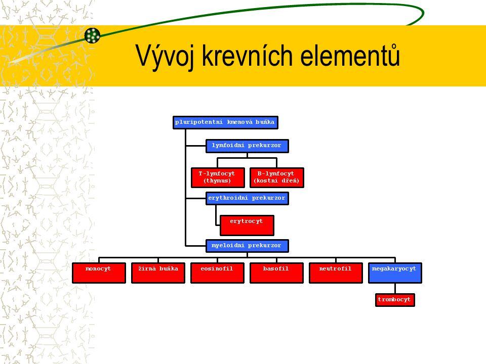 Vývoj krevních elementů