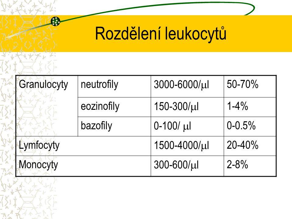 Rozdělení leukocytů Granulocyty neutrofily 3000-6000/l 50-70%