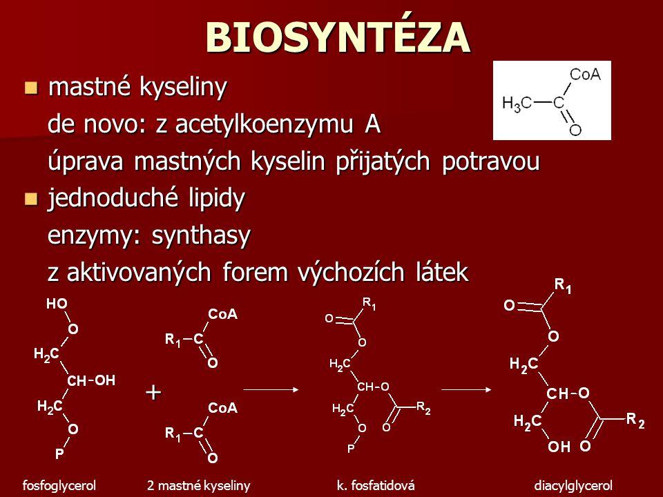 BIOSYNTÉZA mastné kyseliny de novo: z acetylkoenzymu A
