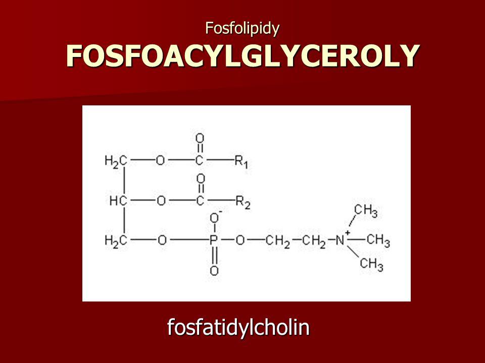 Fosfolipidy FOSFOACYLGLYCEROLY
