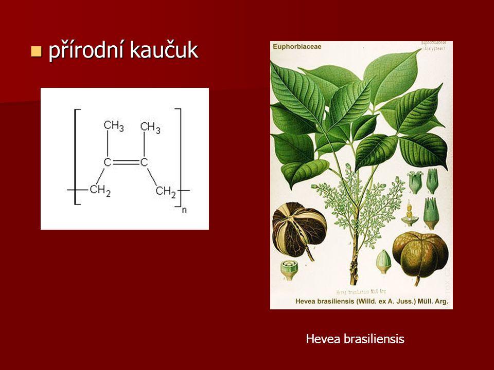 přírodní kaučuk Hevea brasiliensis