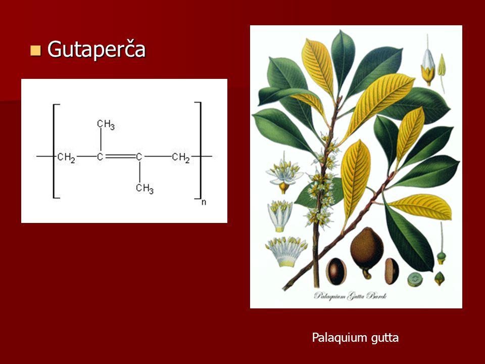Gutaperča Palaquium gutta