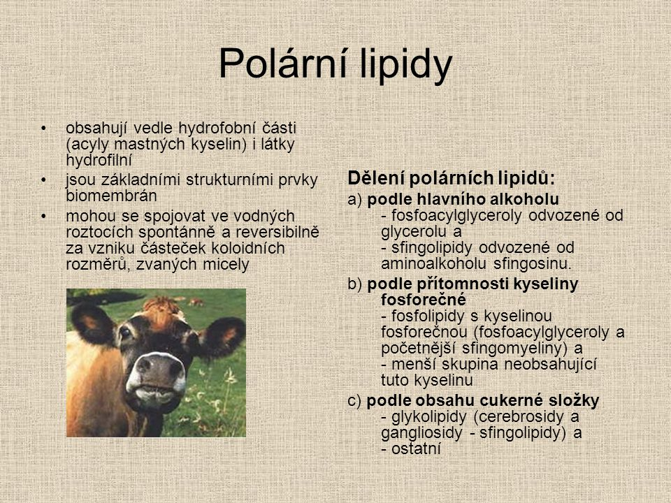 Polární lipidy Dělení polárních lipidů: