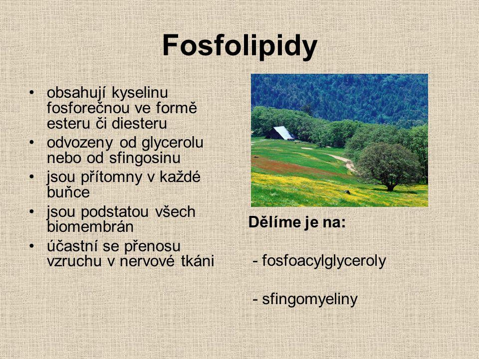 Fosfolipidy obsahují kyselinu fosforečnou ve formě esteru či diesteru