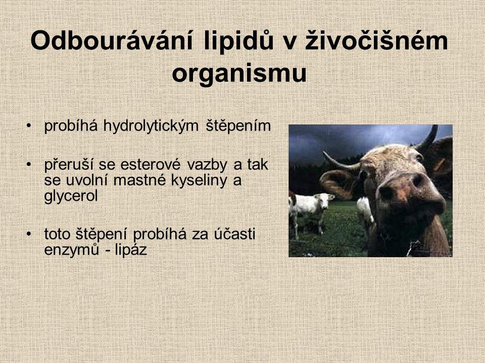 Odbourávání lipidů v živočišném organismu