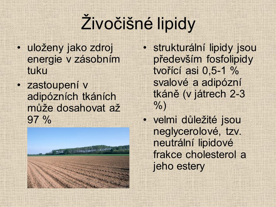 Živočišné lipidy uloženy jako zdroj energie v zásobním tuku