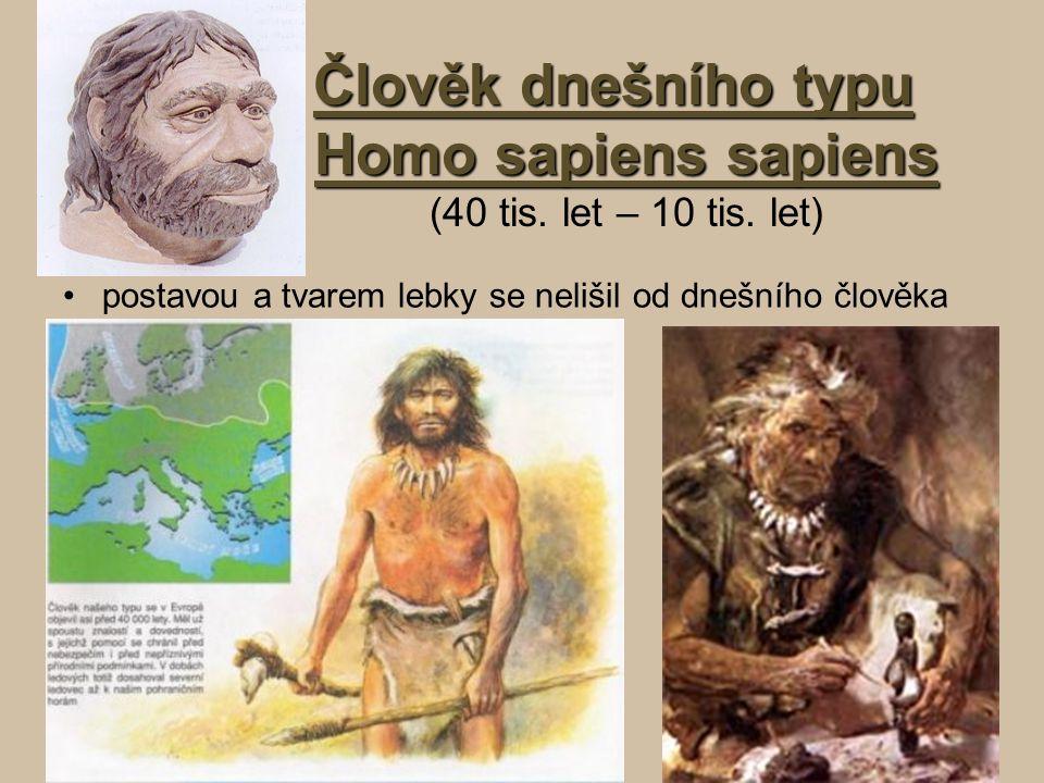 Člověk dnešního typu Homo sapiens sapiens (40 tis. let – 10 tis. let)