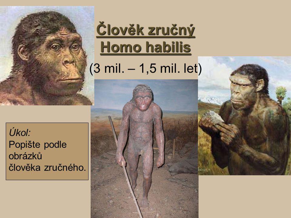 Člověk zručný Homo habilis (3 mil. – 1,5 mil. let)