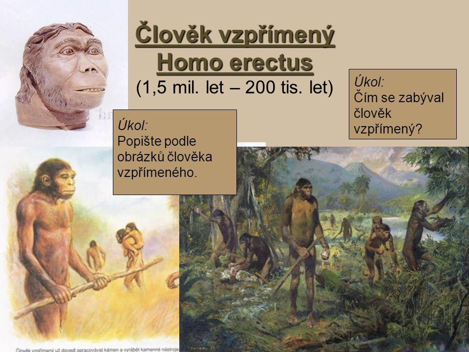 Člověk vzpřímený Homo erectus (1,5 mil. let – 200 tis. let)