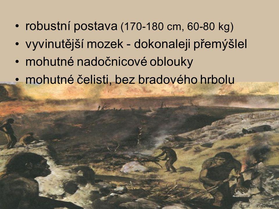 robustní postava (170-180 cm, 60-80 kg)