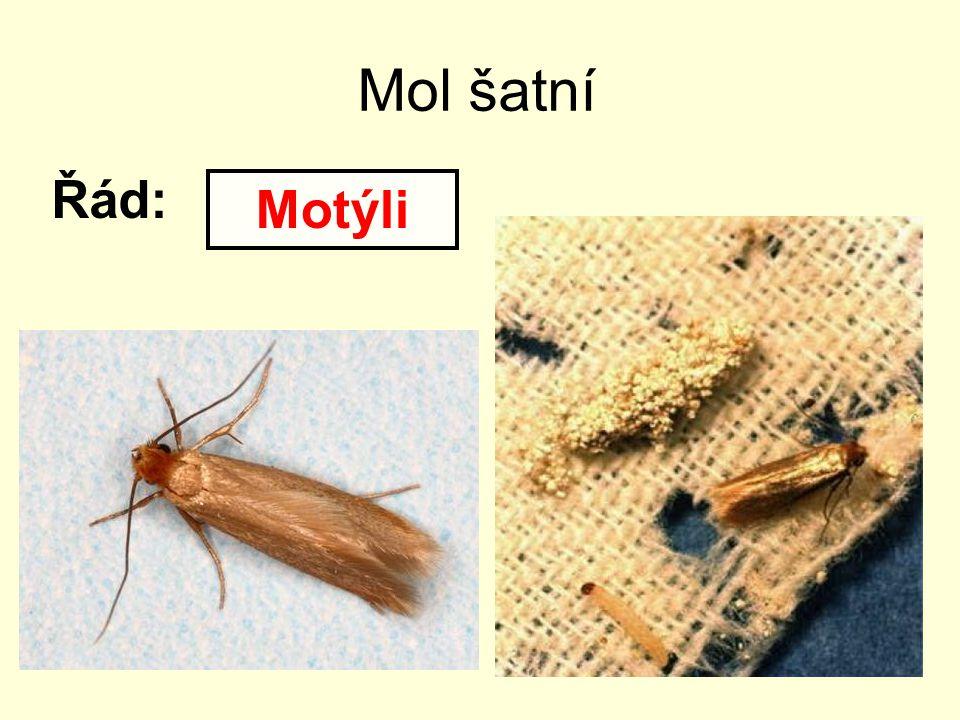 Mol šatní Řád: Motýli