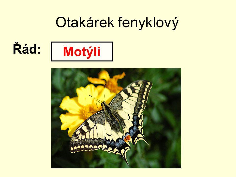 Otakárek fenyklový Řád: Motýli