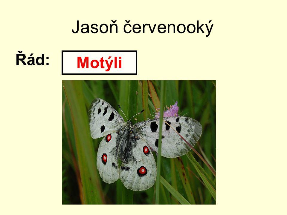 Jasoň červenooký Řád: Motýli