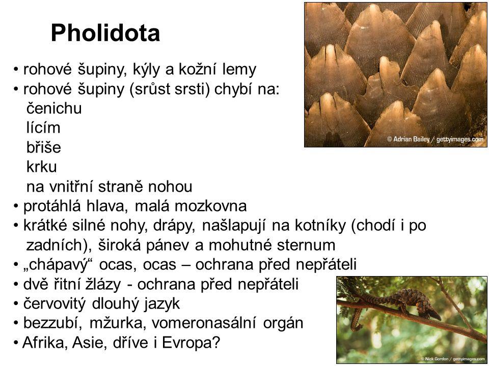 Pholidota rohové šupiny, kýly a kožní lemy