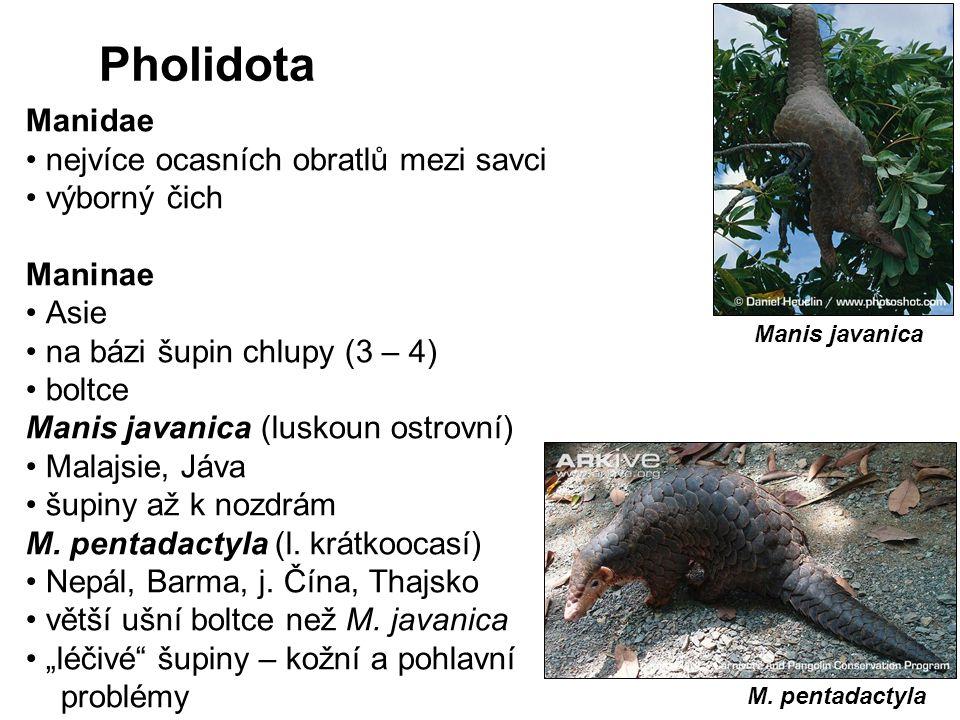 Pholidota Manidae nejvíce ocasních obratlů mezi savci výborný čich