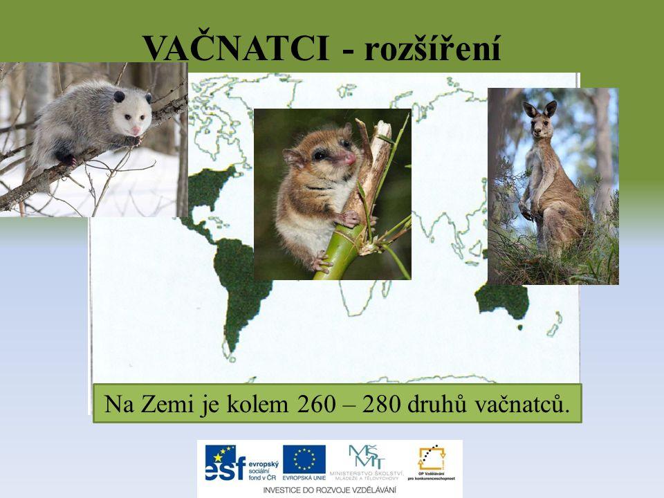 Na Zemi je kolem 260 – 280 druhů vačnatců.