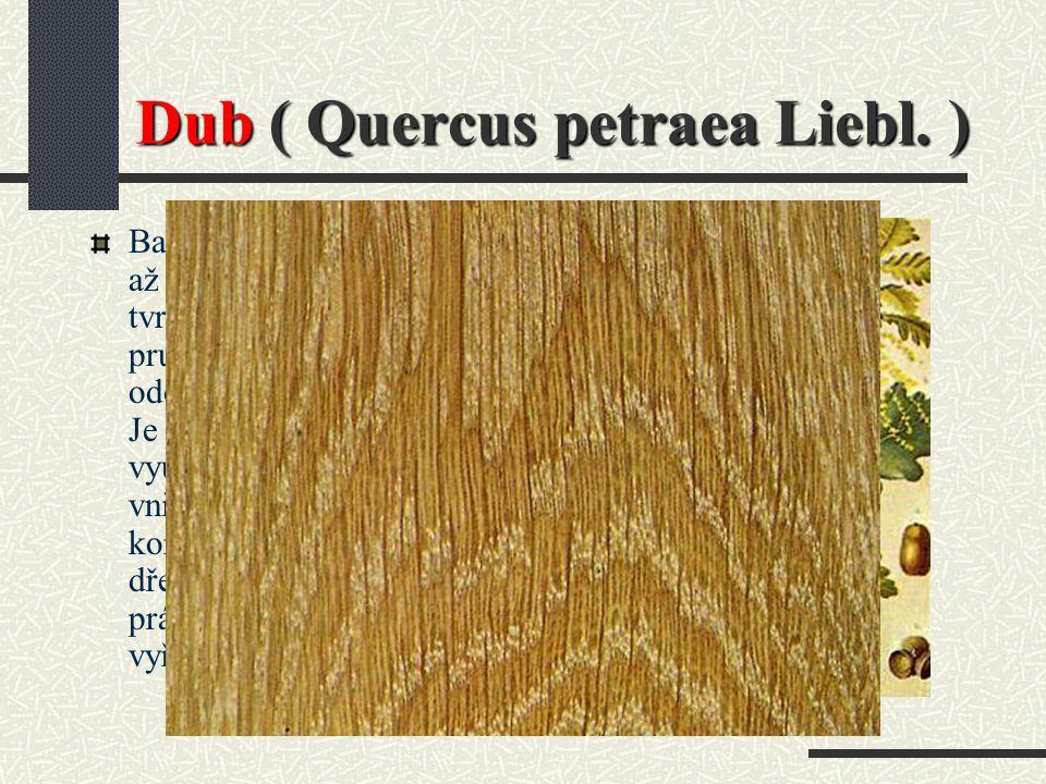Dub ( Quercus petraea Liebl. )