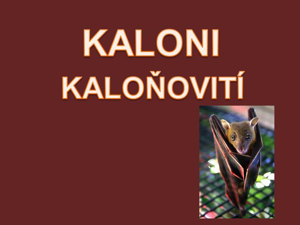 KALONI KALOŇOVITÍ