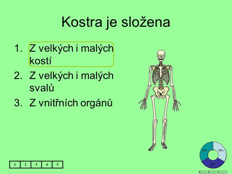 Kostra je složena Z velkých i malých kostí Z velkých i malých svalů