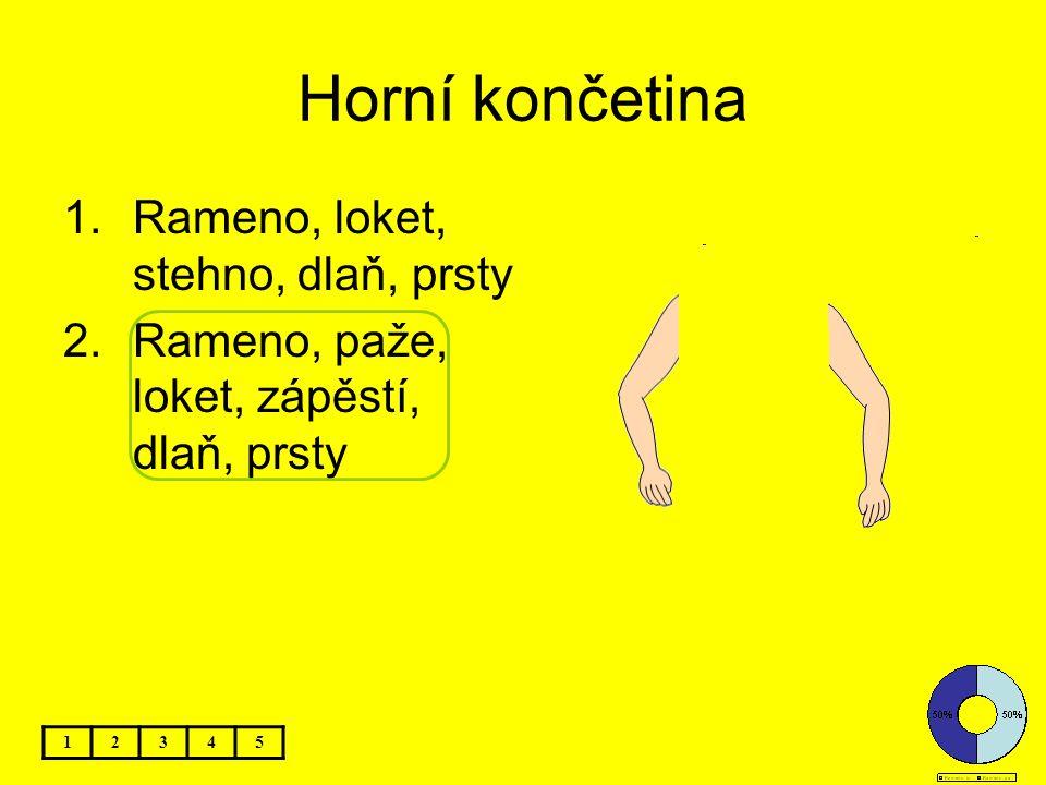 Horní končetina Rameno, loket, stehno, dlaň, prsty