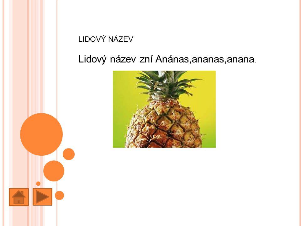 Lidový název zní Anánas,ananas,anana.