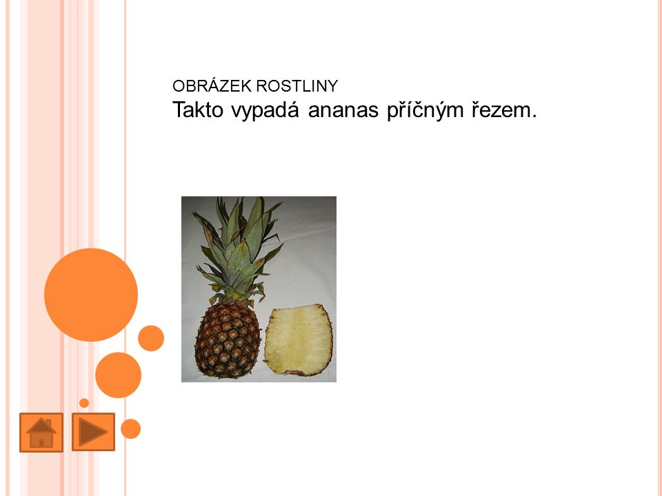 Takto vypadá ananas příčným řezem.