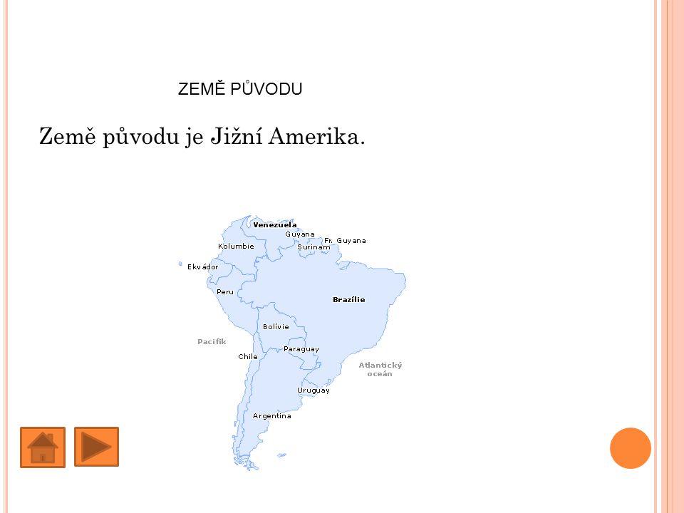 Země původu je Jižní Amerika.
