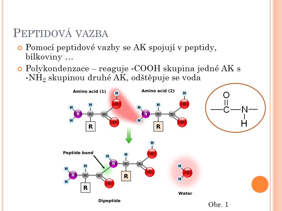 Peptidová vazba Pomocí peptidové vazby se AK spojují v peptidy, bílkoviny …