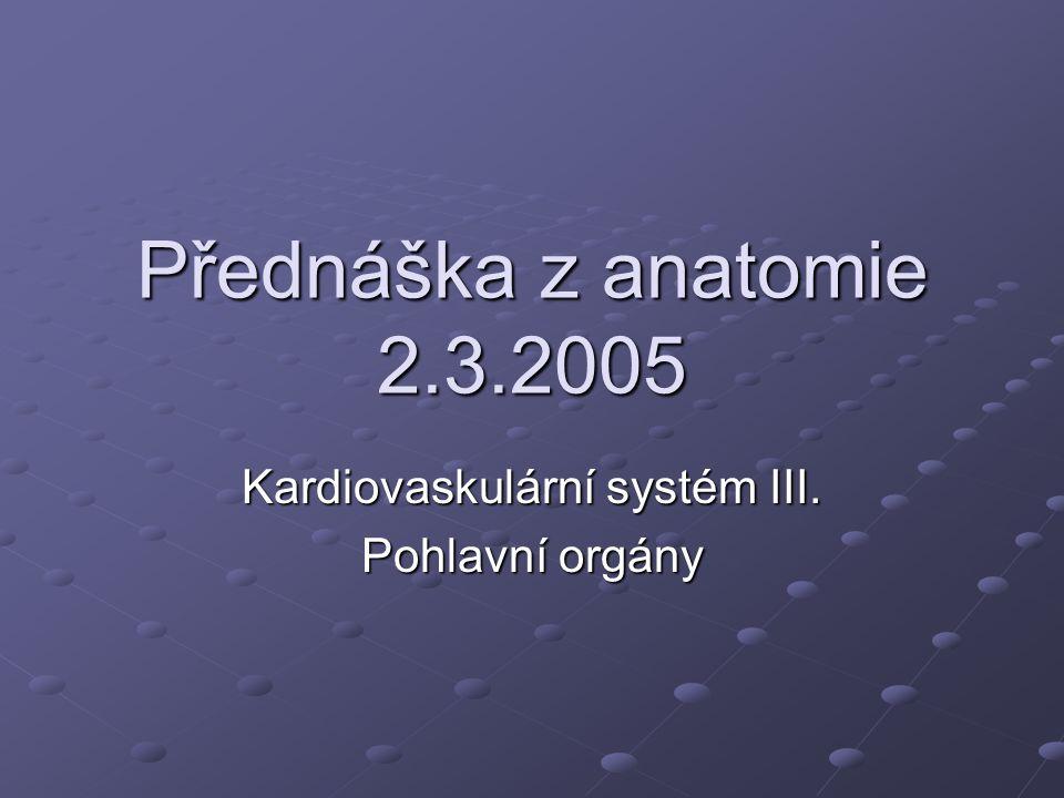 Kardiovaskulární systém III. Pohlavní orgány