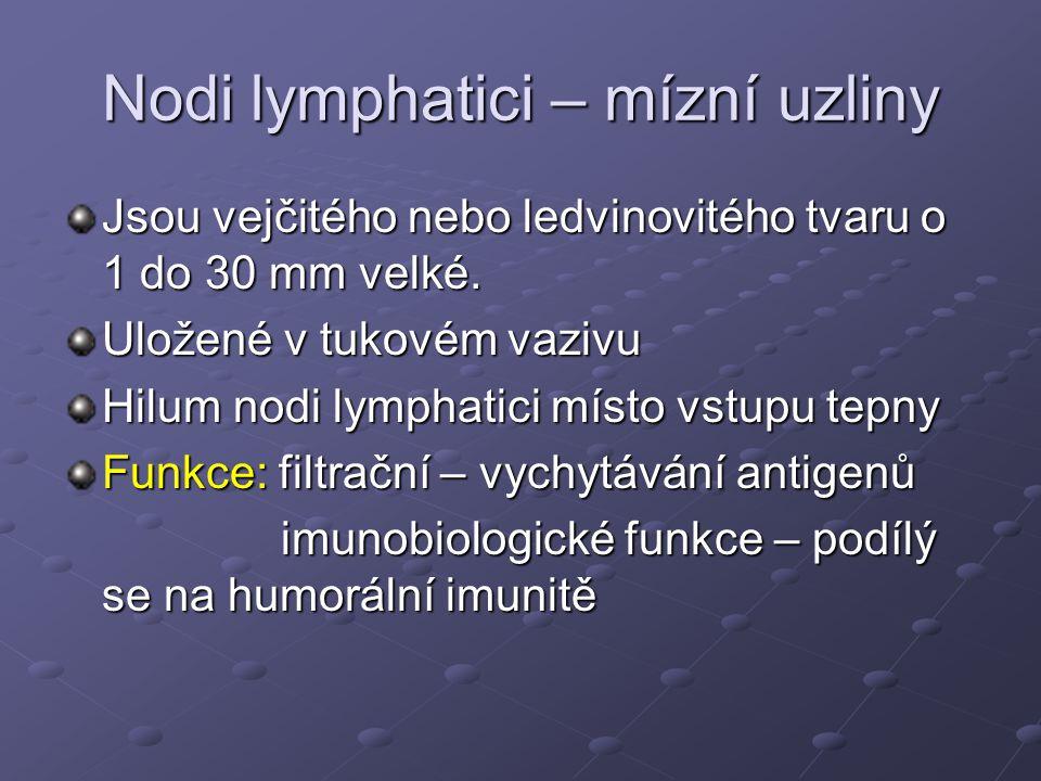 Nodi lymphatici – mízní uzliny