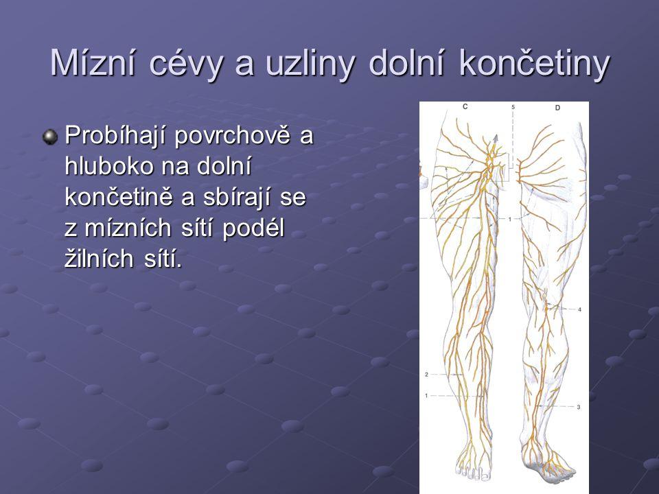 Mízní cévy a uzliny dolní končetiny