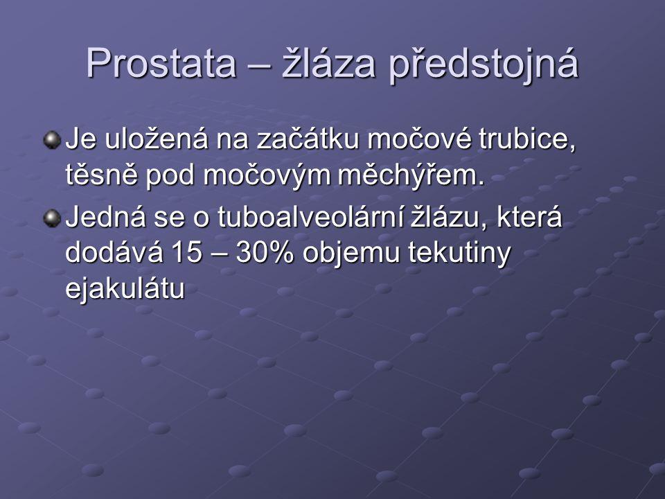 Prostata – žláza předstojná