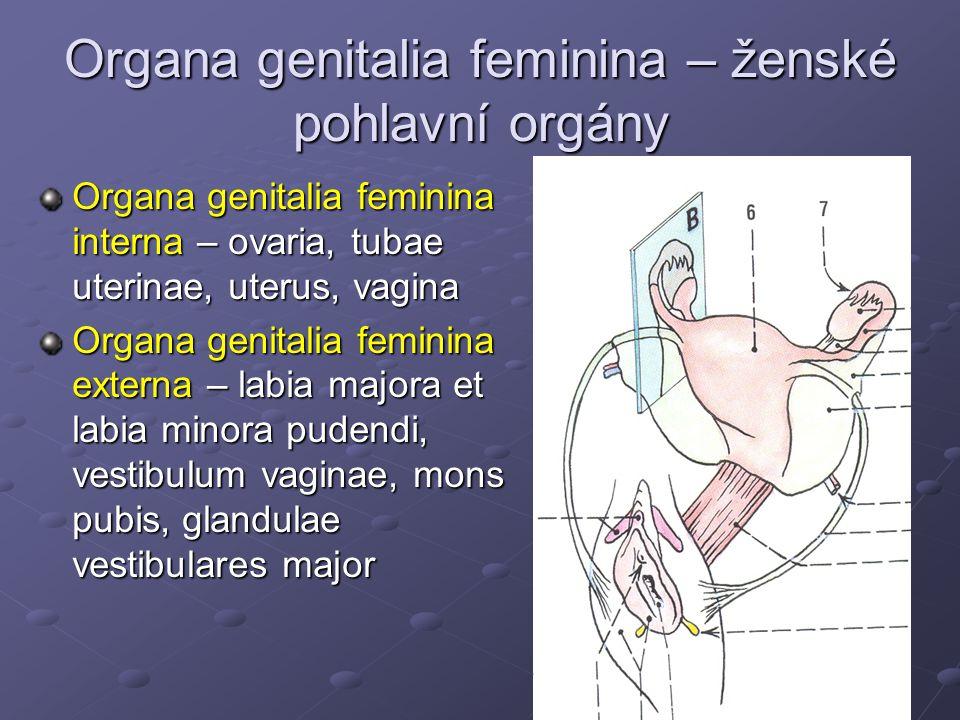 Organa genitalia feminina – ženské pohlavní orgány