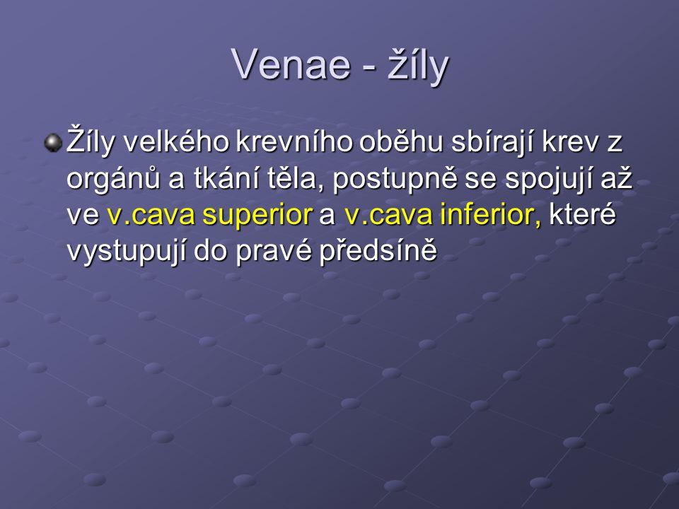 Venae - žíly