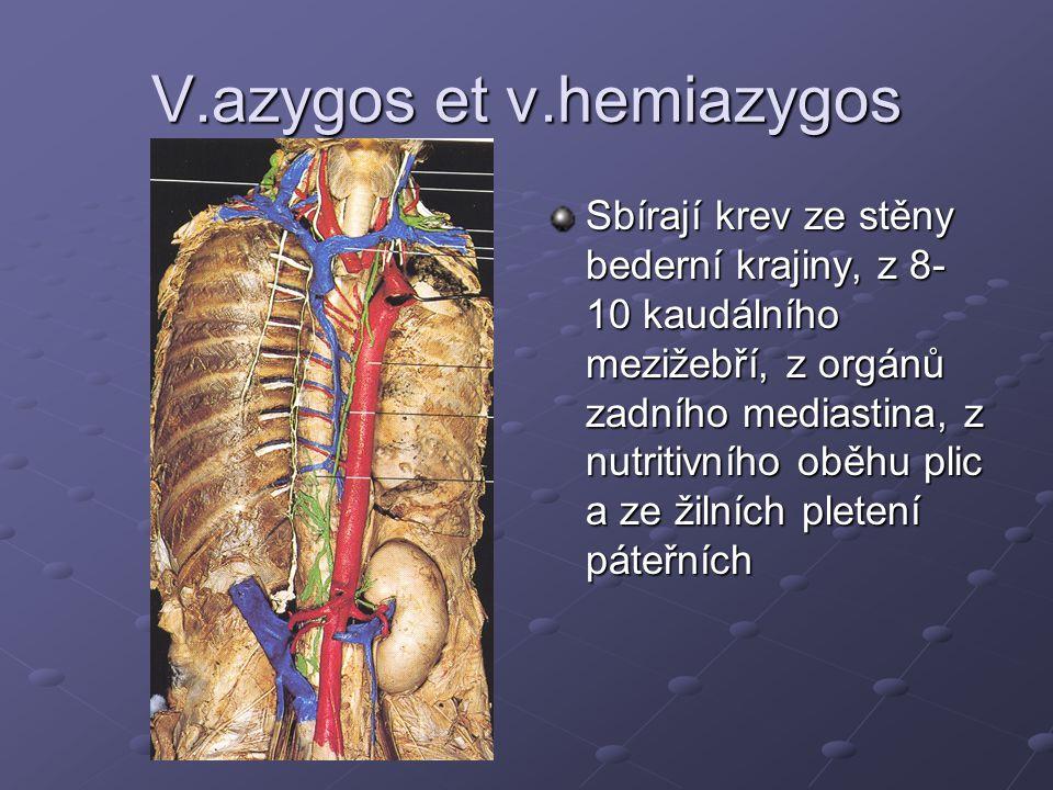 V.azygos et v.hemiazygos