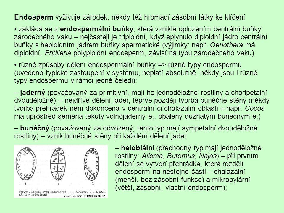 Endosperm vyživuje zárodek, někdy též hromadí zásobní látky ke klíčení