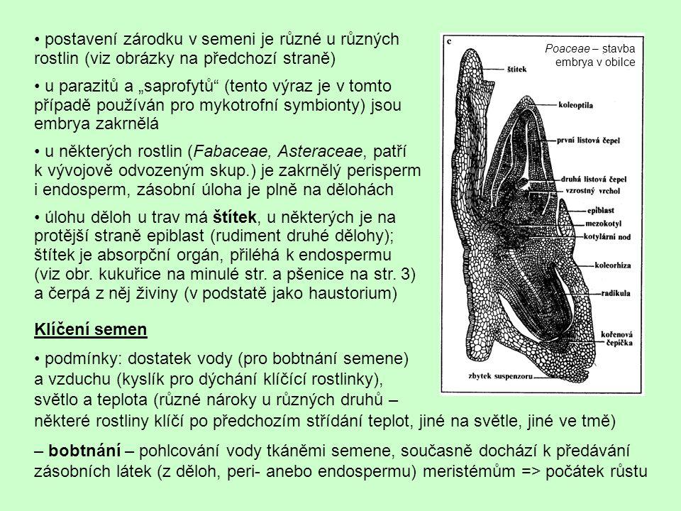 • postavení zárodku v semeni je různé u různých rostlin (viz obrázky na předchozí straně)