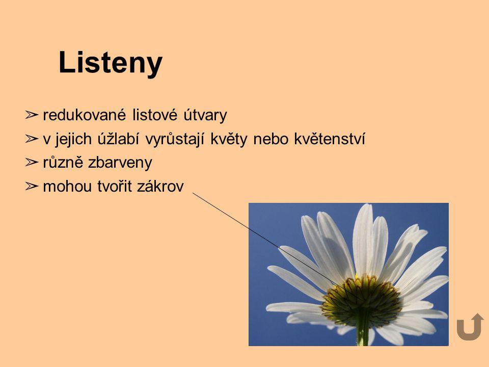 Listeny redukované listové útvary