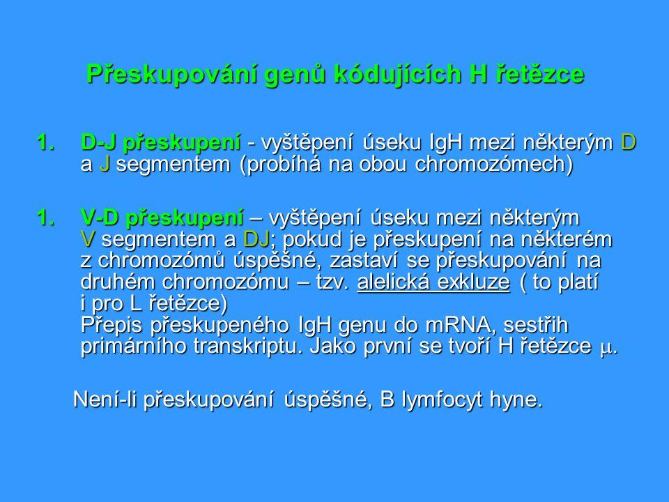 Přeskupování genů kódujících H řetězce