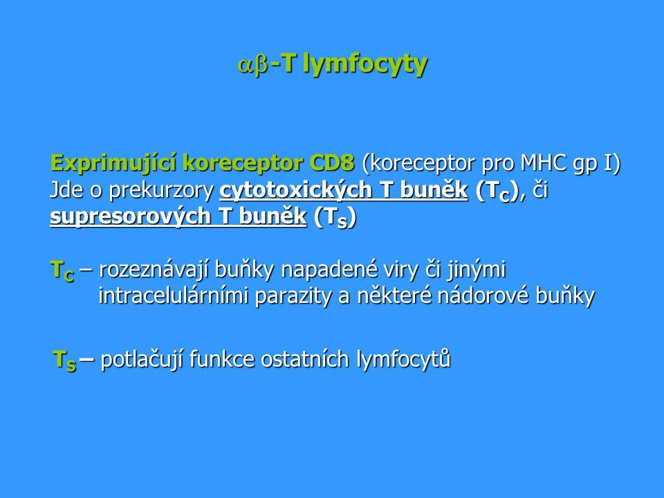 ab-T lymfocyty