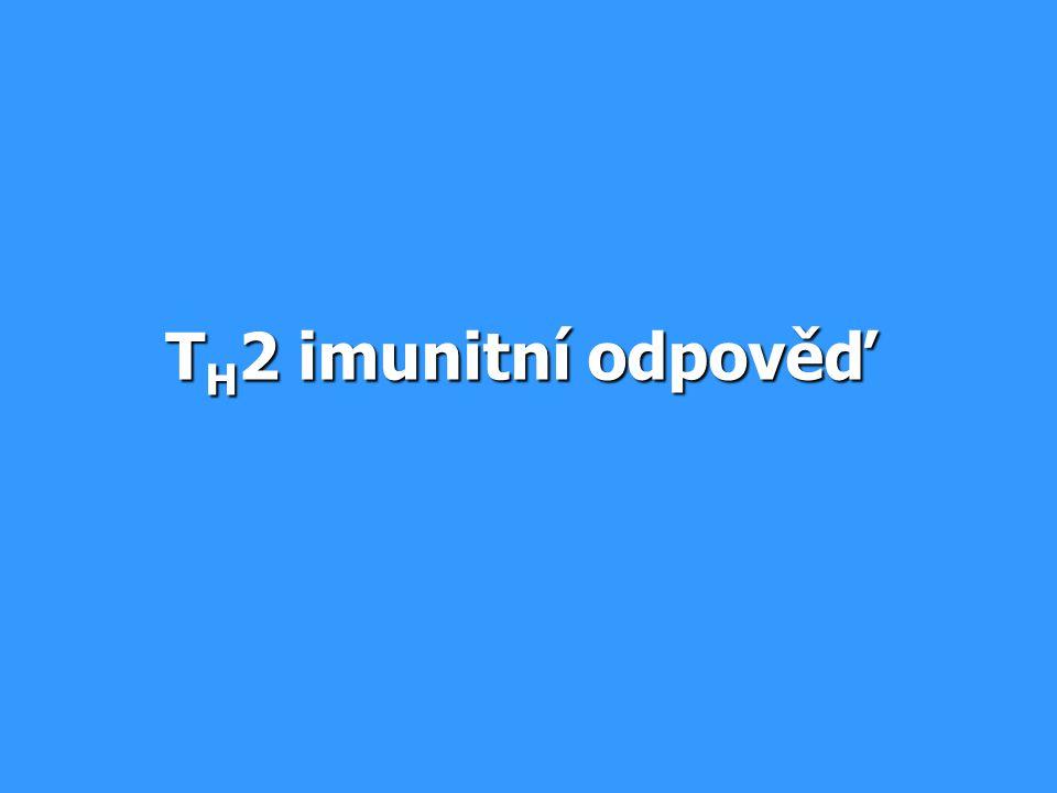 TH2 imunitní odpověď