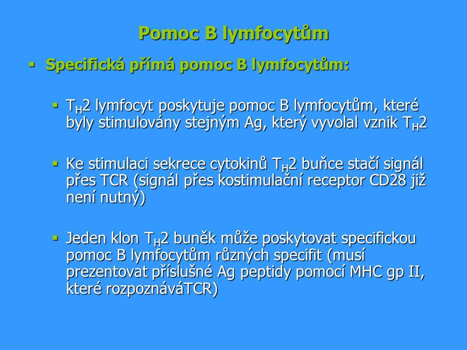 Pomoc B lymfocytům Specifická přímá pomoc B lymfocytům: