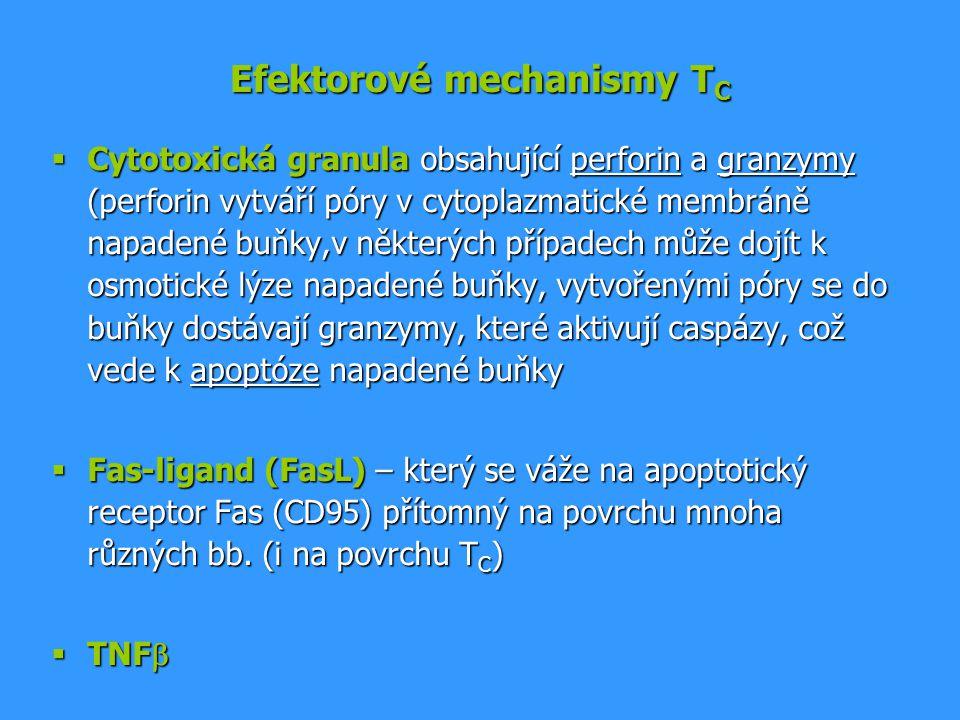Efektorové mechanismy TC