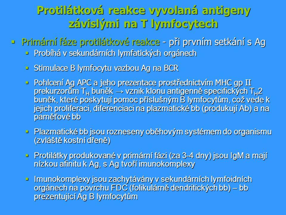 Protilátková reakce vyvolaná antigeny závislými na T lymfocytech