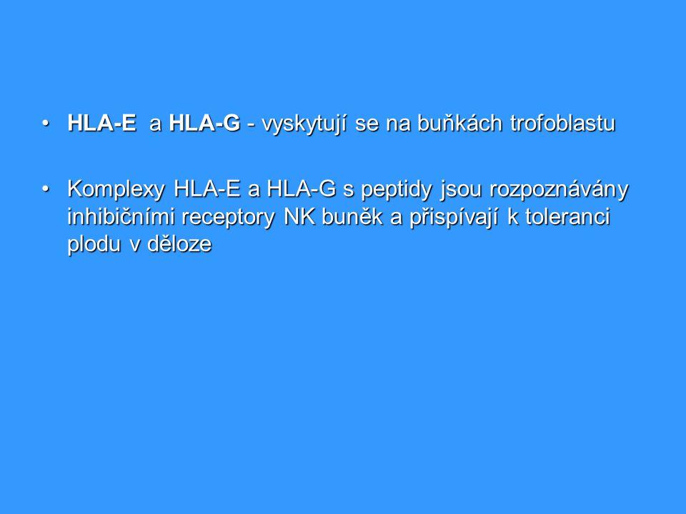 HLA-E a HLA-G - vyskytují se na buňkách trofoblastu