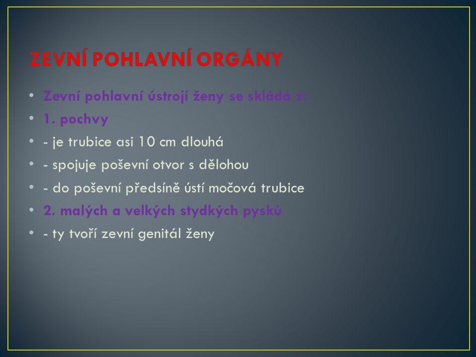 ZEVNÍ POHLAVNÍ ORGÁNY Zevní pohlavní ústrojí ženy se skládá z: