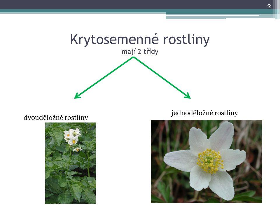 Krytosemenné rostliny mají 2 třídy