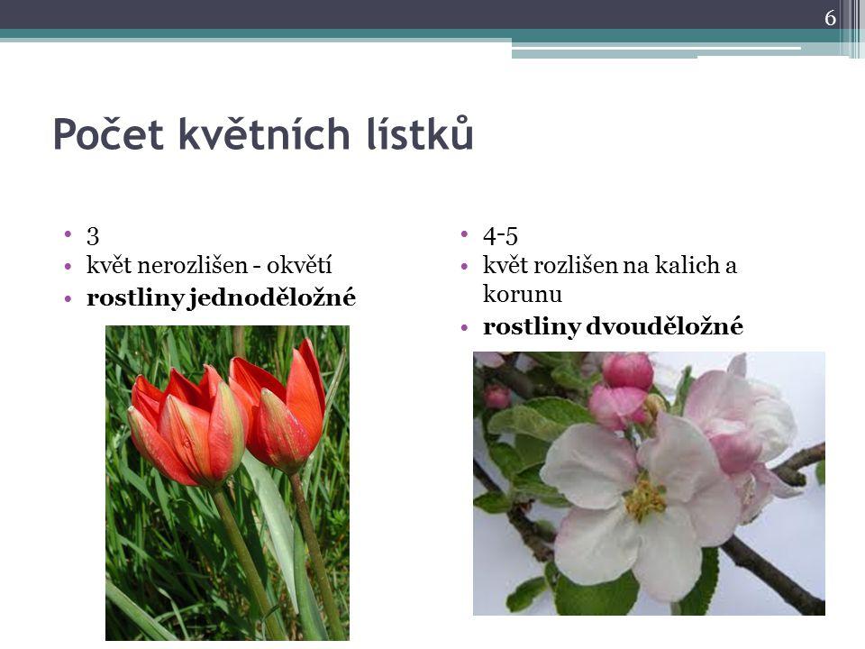 Počet květních lístků 3 květ nerozlišen - okvětí rostliny jednoděložné